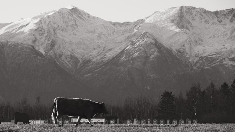 Michael Wachel Photography in Palmer, Alaska along the Matanuska River.